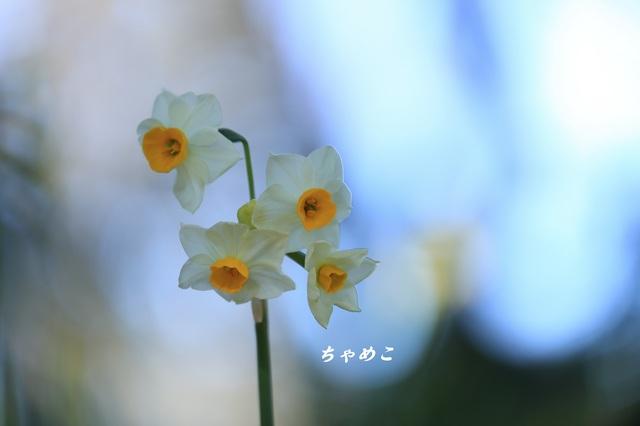 DPP_6768.JPG