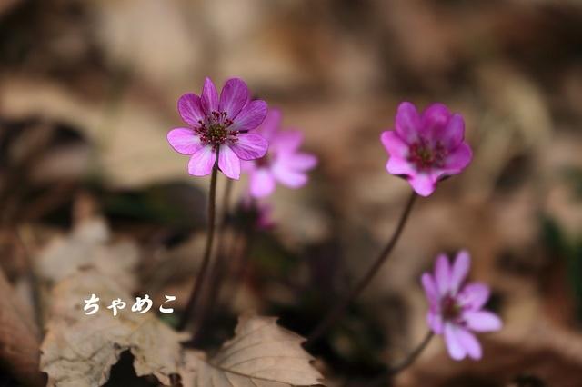DPP_7068.JPG